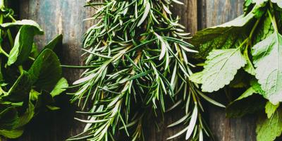 Expert-conseil en production horticole | Les Serres Coulombe | Saint-Norbert